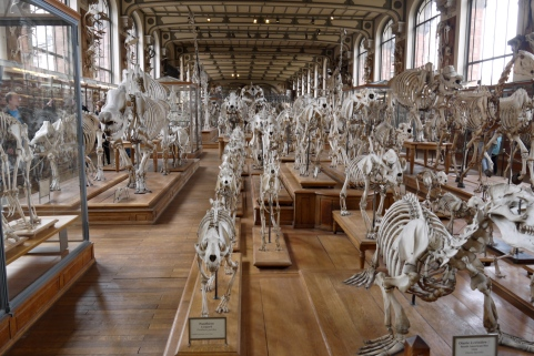 National Zoological Museum, Paris