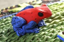 Frog, detail
