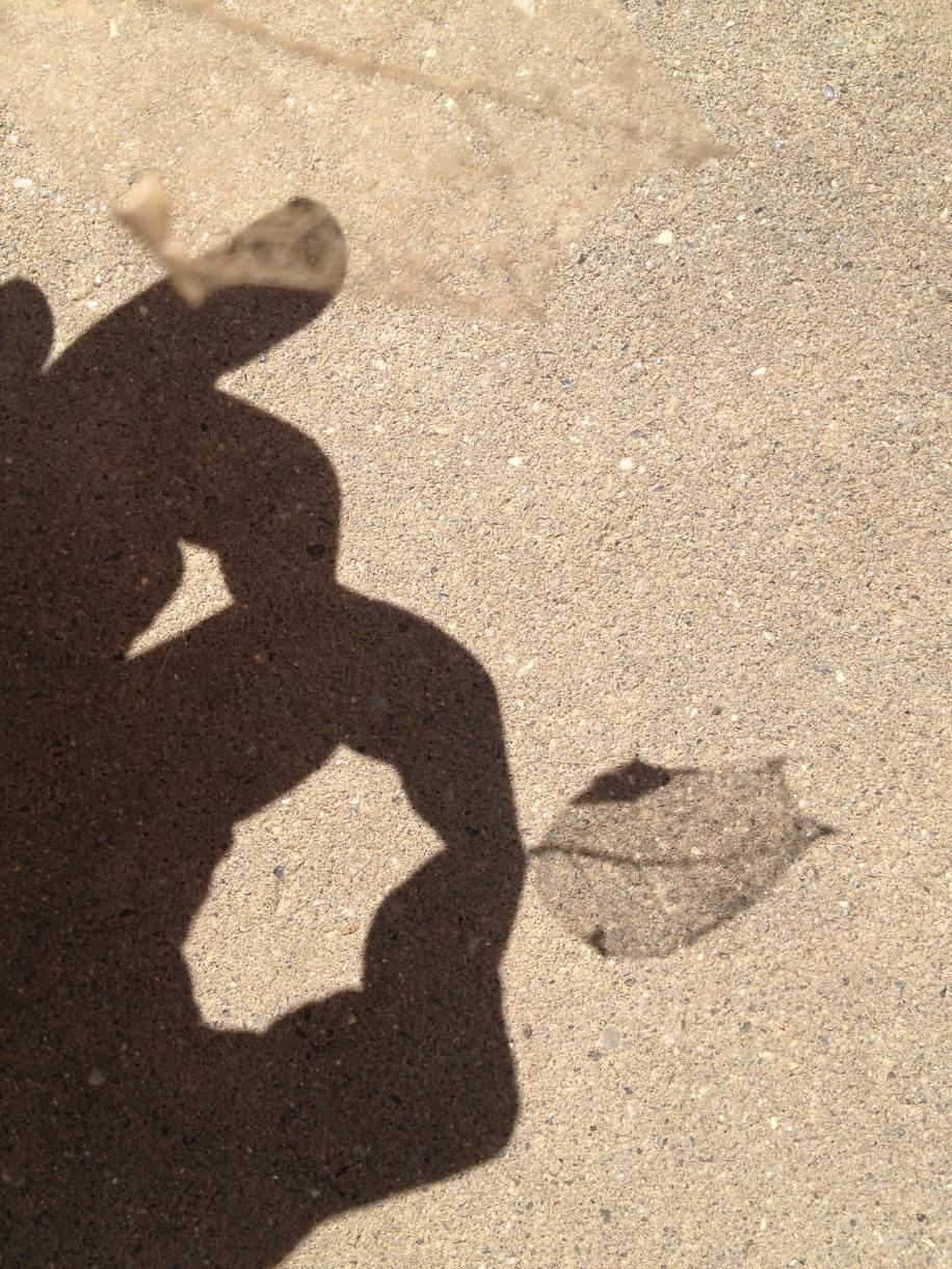 shadow animal with leaf