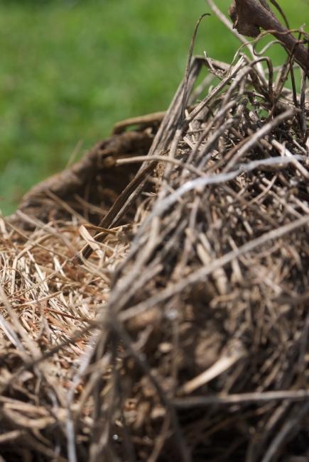 fallen nest
