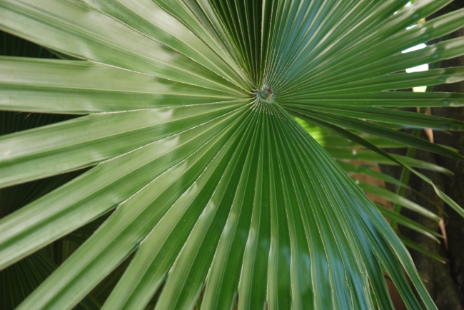 I have always love these palms