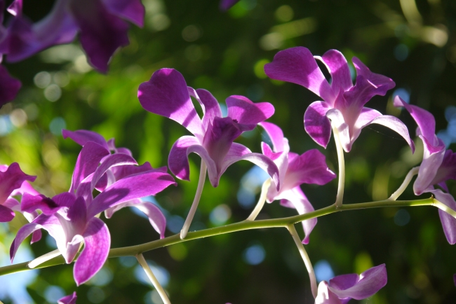 fabulous orchid