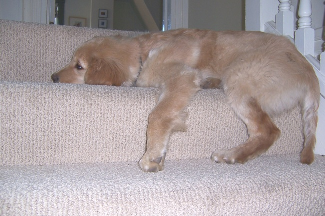 I use to fit on a stair.