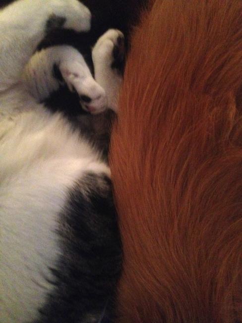 fur times two