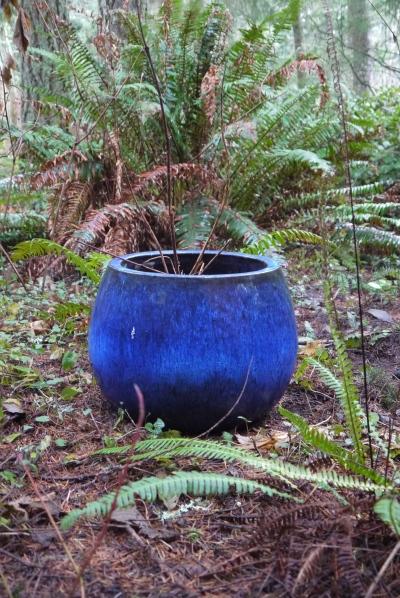 blue planter under ferns