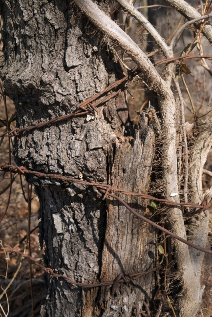 barbed wire and poison ivy