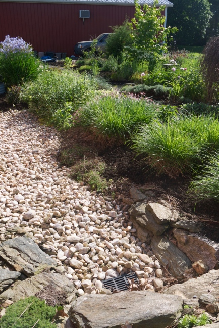 dry creek bed with no weeds