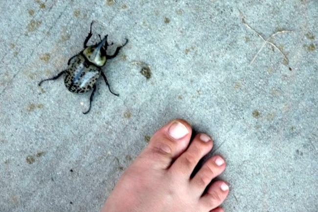 bigger than my toe.