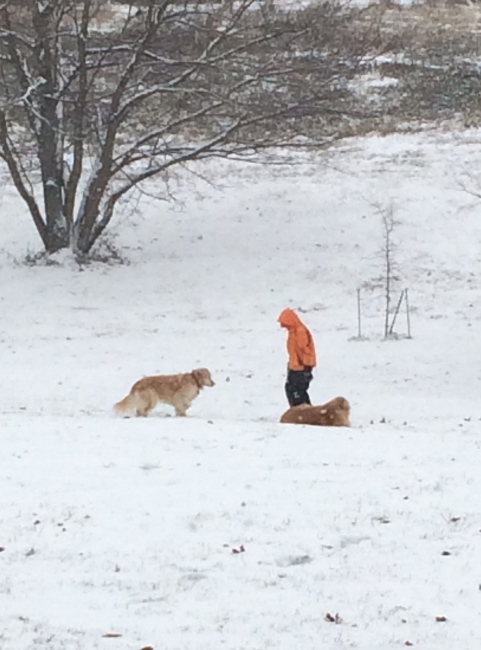 kid, dogs and snow
