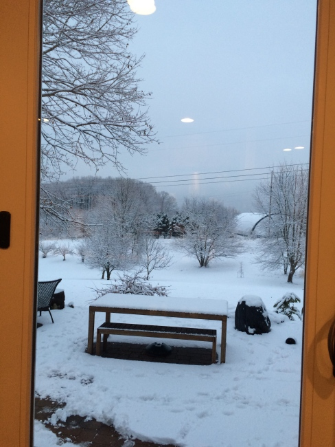 looking out the kitchen door