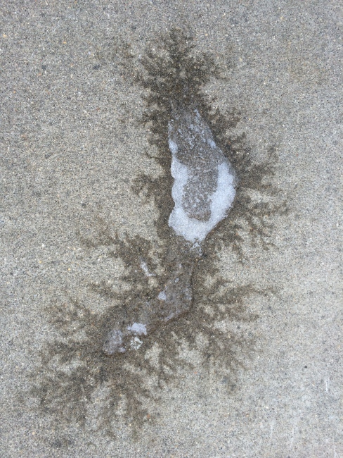 frost from the melting snow