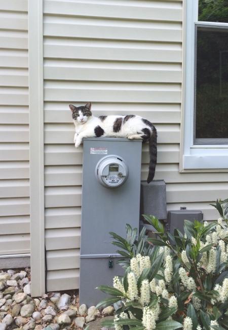 whatcha doin'?